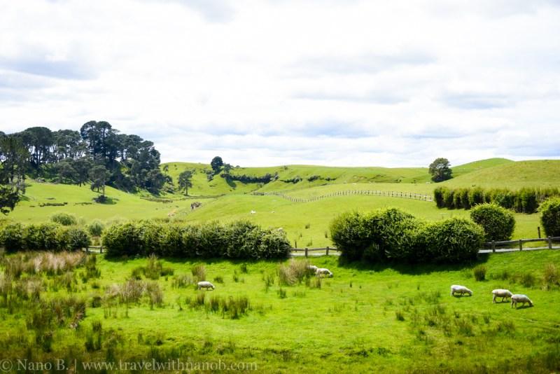 hobbiton-tour-auckland-new-zealand-50