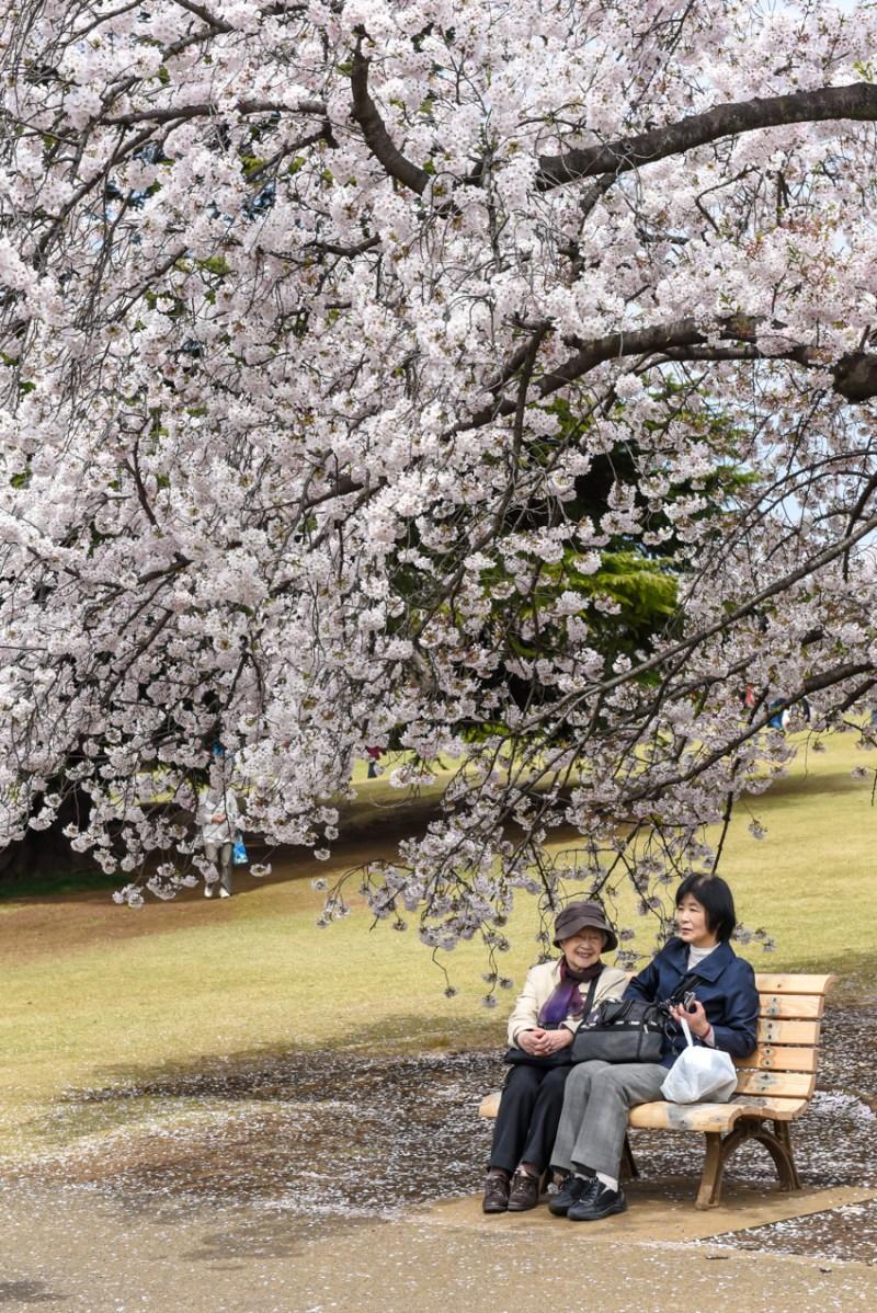 shinjuku-gyoen-garden-tokyo-17