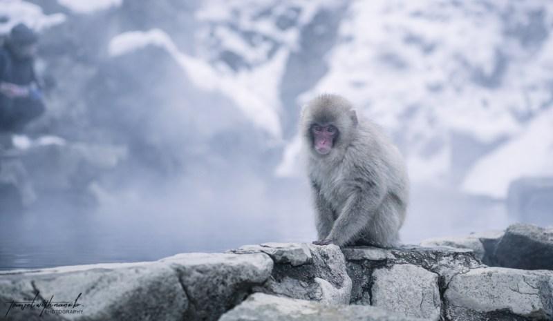 japanese-snow-monkeys-jigokudani-nagano-26