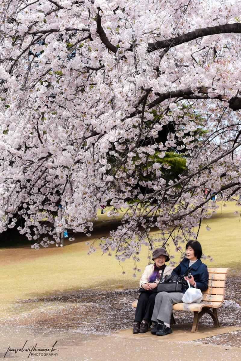 tokyo-best-cherry-blossom-spots-27