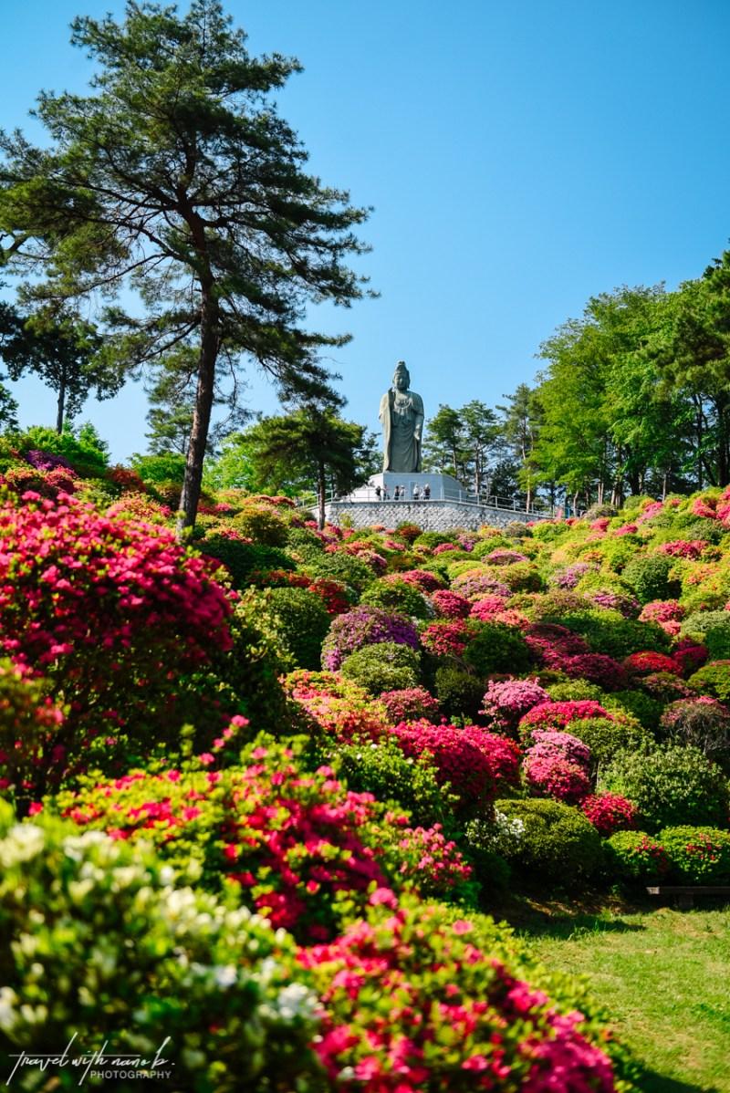 azalea-garden-shiofune-kannon-ji-temple-16