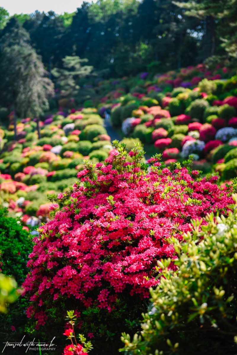 azalea-garden-shiofune-kannon-ji-temple-31