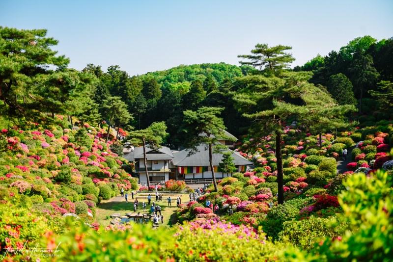 azalea-garden-shiofune-kannon-ji-temple-33