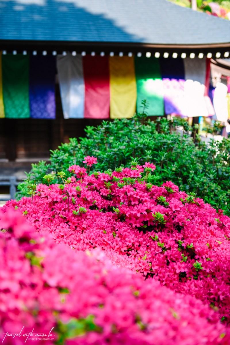 azalea-garden-shiofune-kannon-ji-temple-42