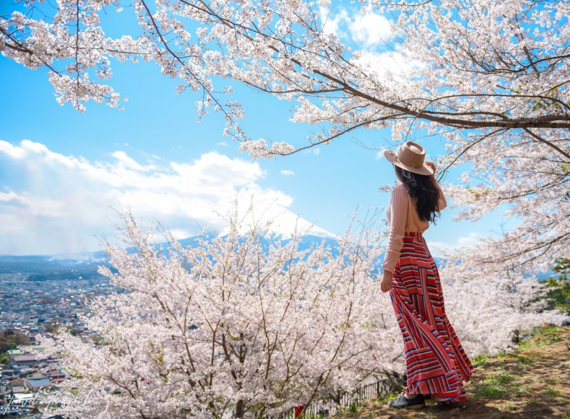 cherry-blossoms-mt-fuji-japan-4