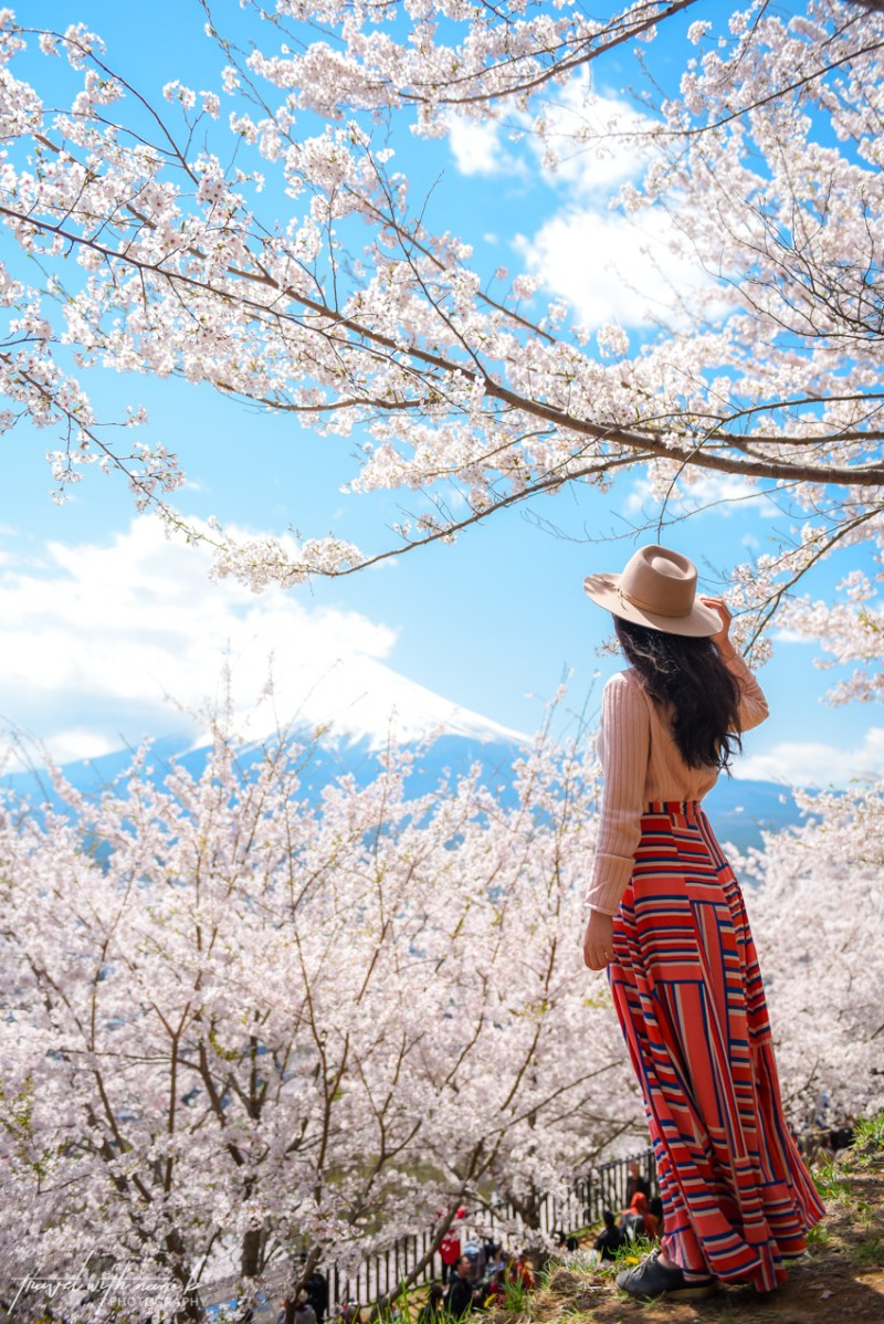 cherry-blossoms-mt-fuji-japan-5