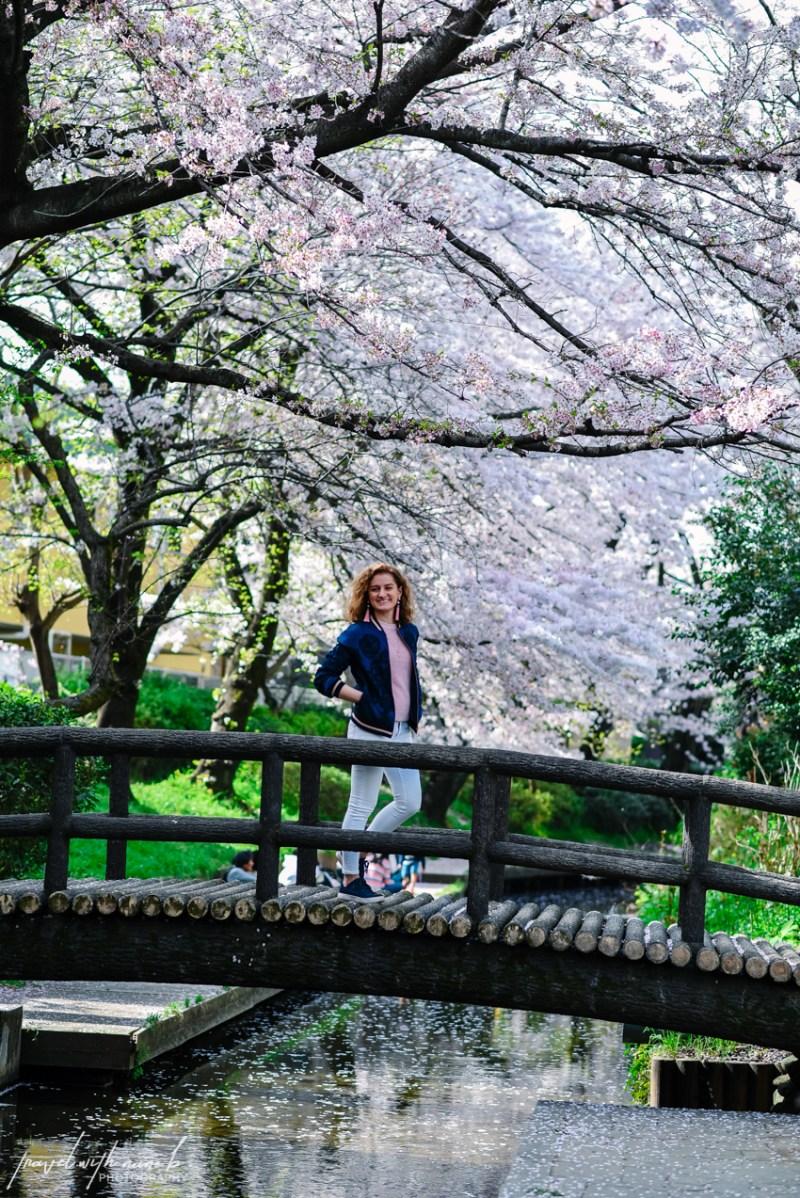 cherry-blossoms-tokyo-39