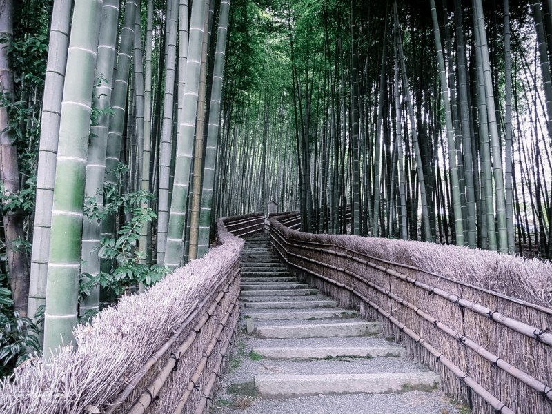 kyoto-secret-gardens-japan-1