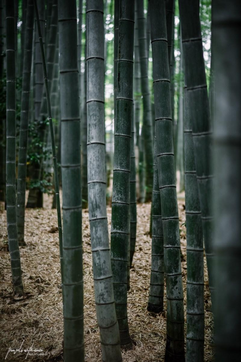 kyoto-secret-gardens-japan-12
