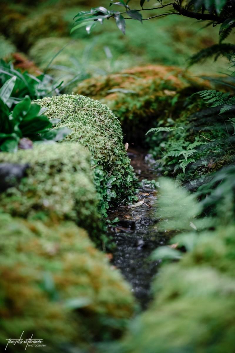 kyoto-secret-gardens-japan-18