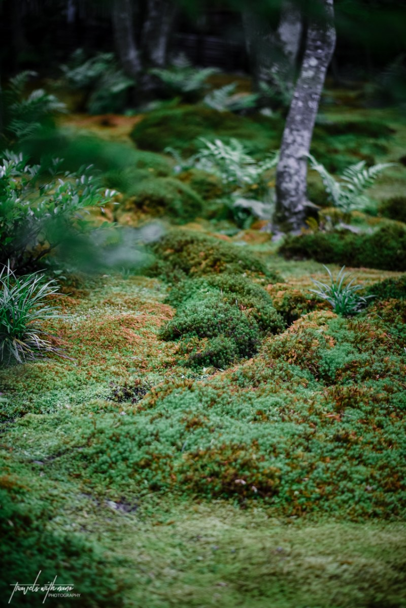 kyoto-secret-gardens-japan-24