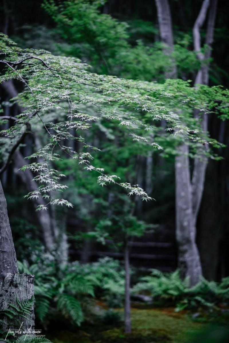 kyoto-secret-gardens-japan-25