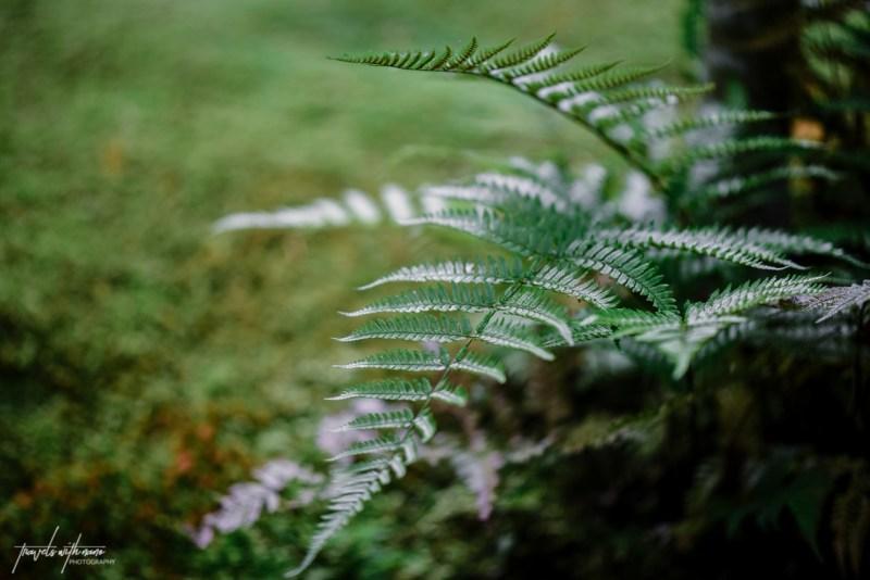 kyoto-secret-gardens-japan-6