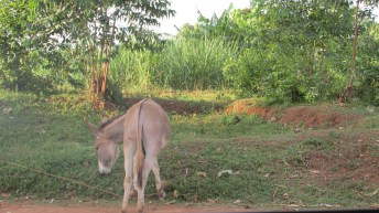 Donkey on side of road.