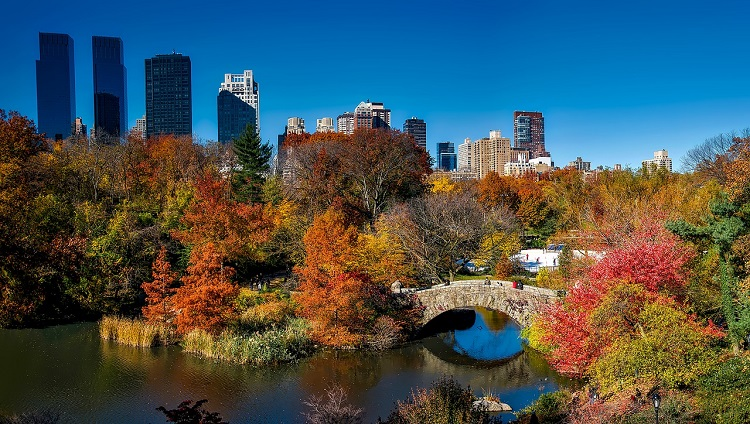 Fall in Cental Park in New York City