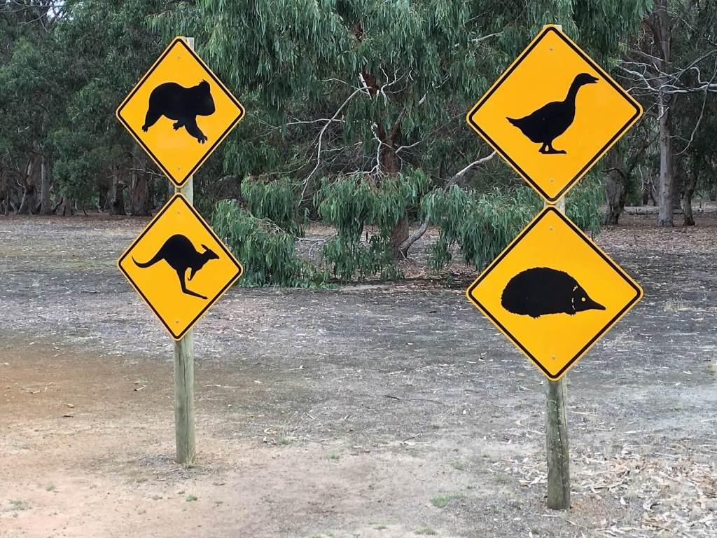 Animals in Australia