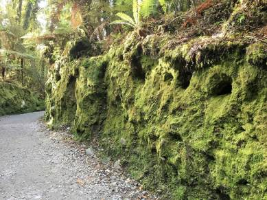Moss-thick growth everywhere