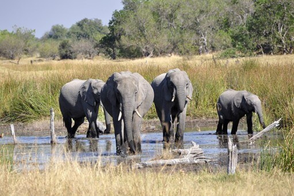Okavango Delta bucket list