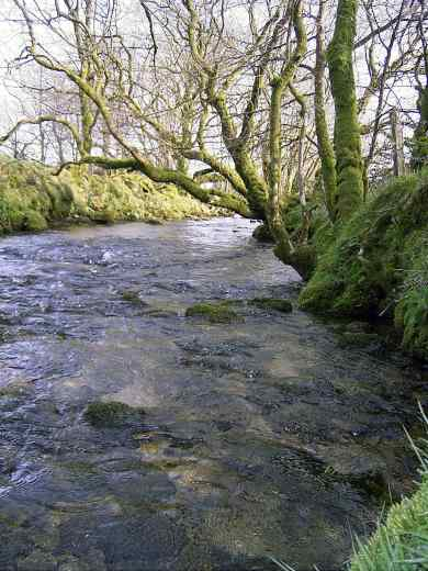 One of many little waterways in Cornwall