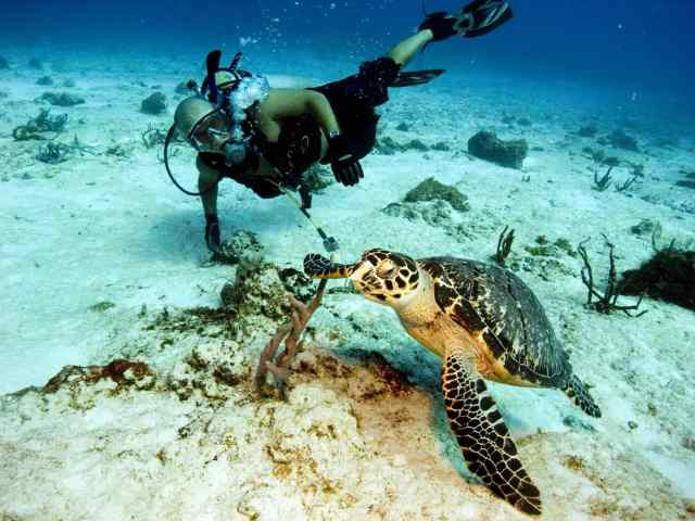 Randy and a Hawksbill in Cozumel