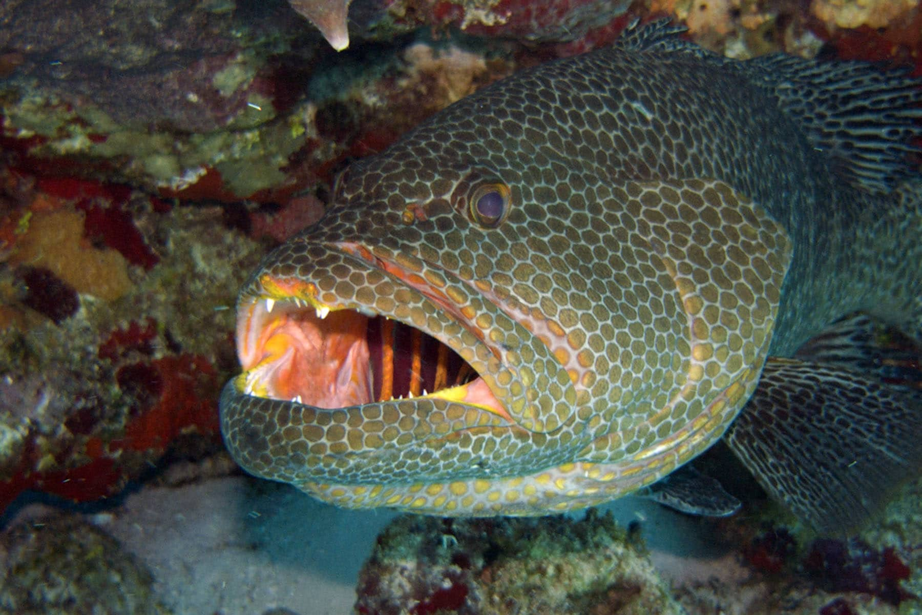 Fab Photos Friday: Funky Fish! | Travels with Tam!
