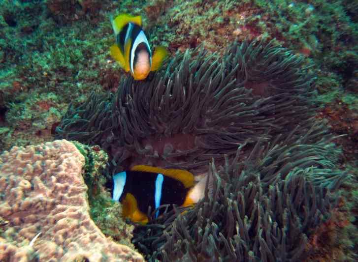 moz 12 ma clownfish best