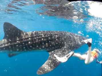 Isa could really keep up with the Whale Sharks!