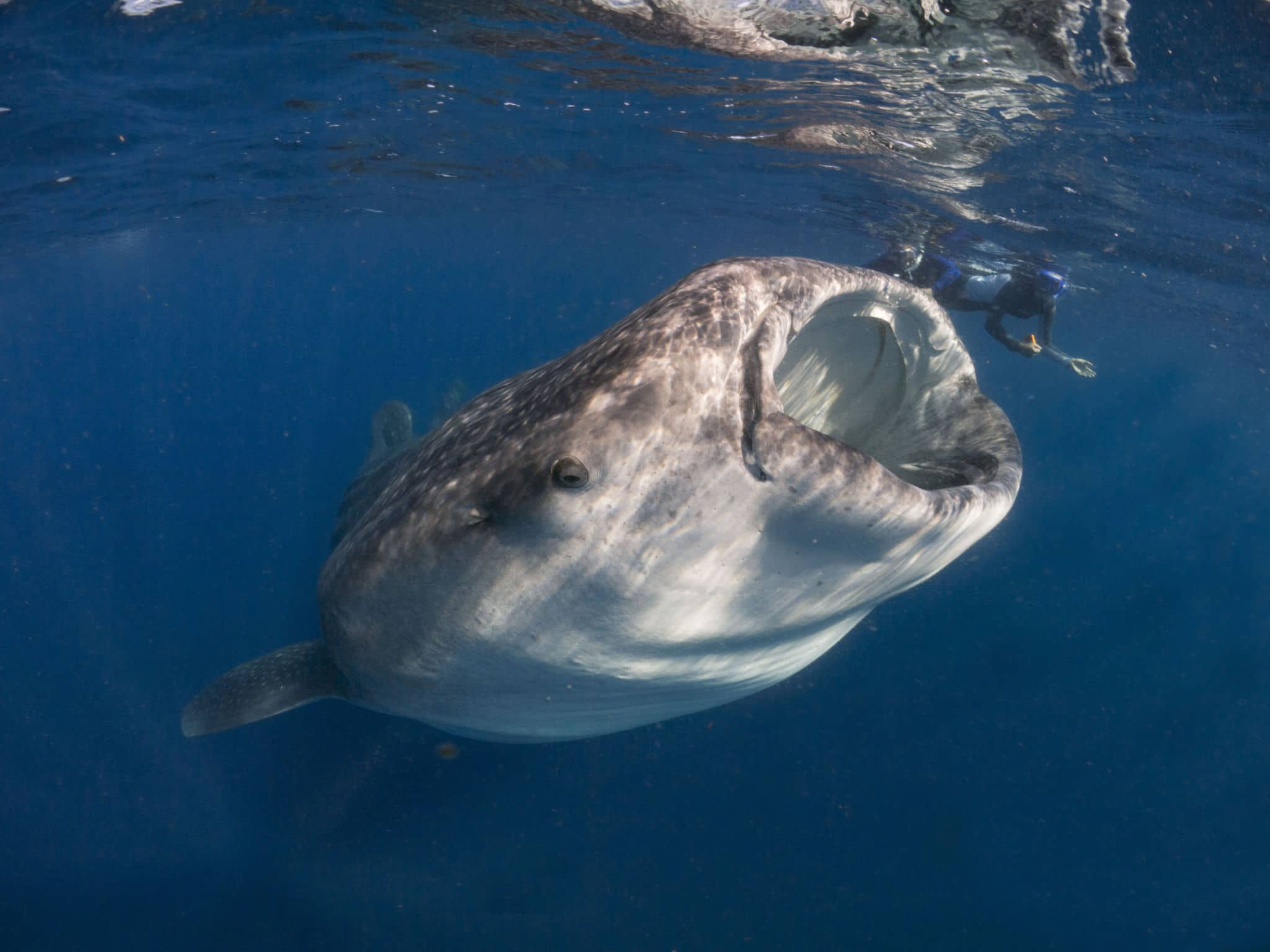 Fab Photos Friday: The Biggest Fish in the Ocean | Travels ...