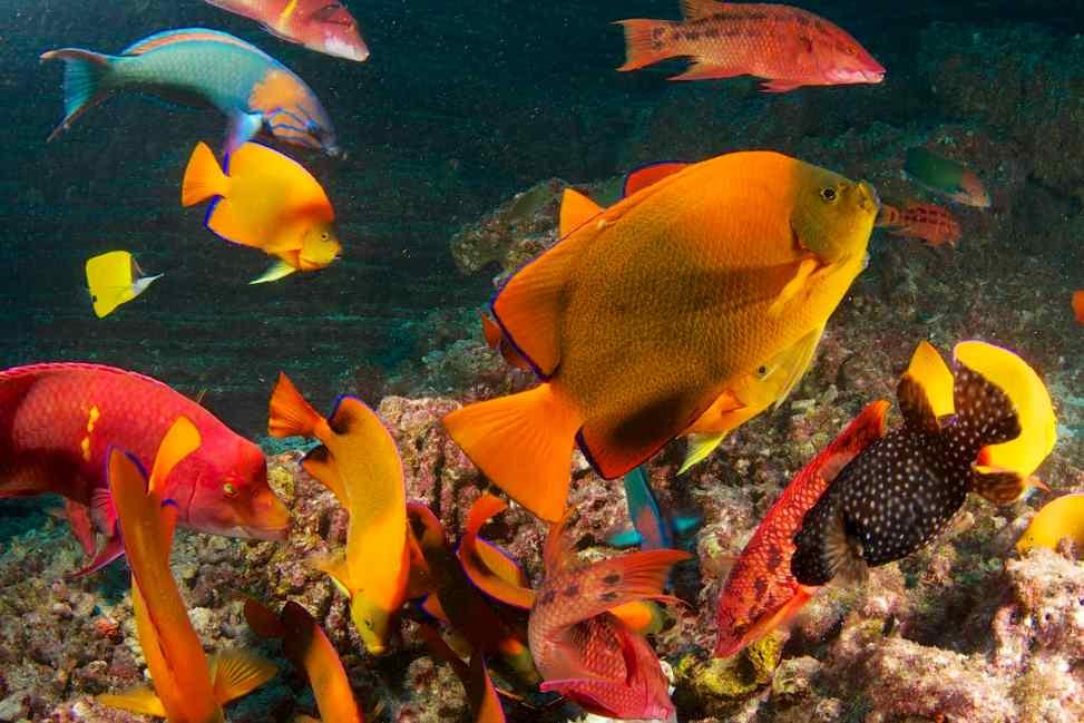 diving, scuba, socorro