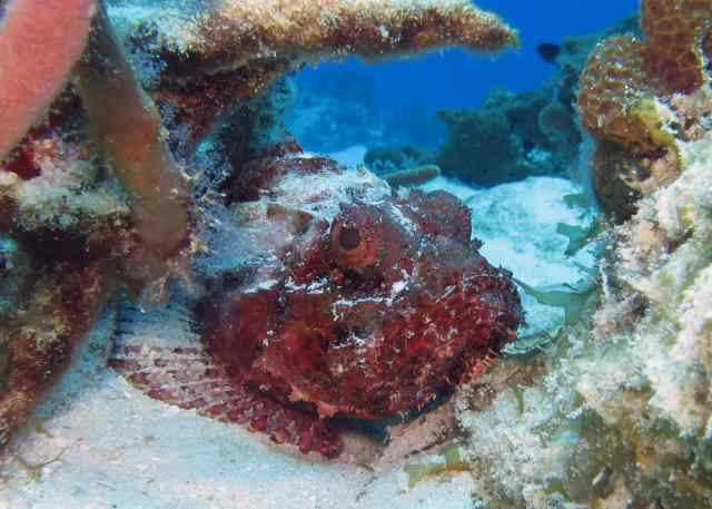 cozumel, snorkeling, wonders of the ocean