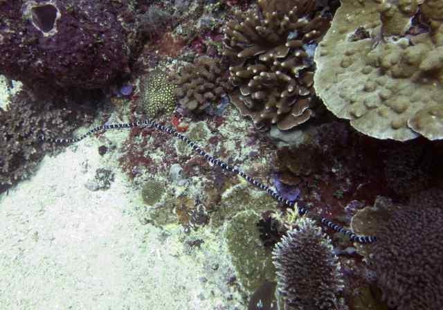 Scuba, diving, Bali