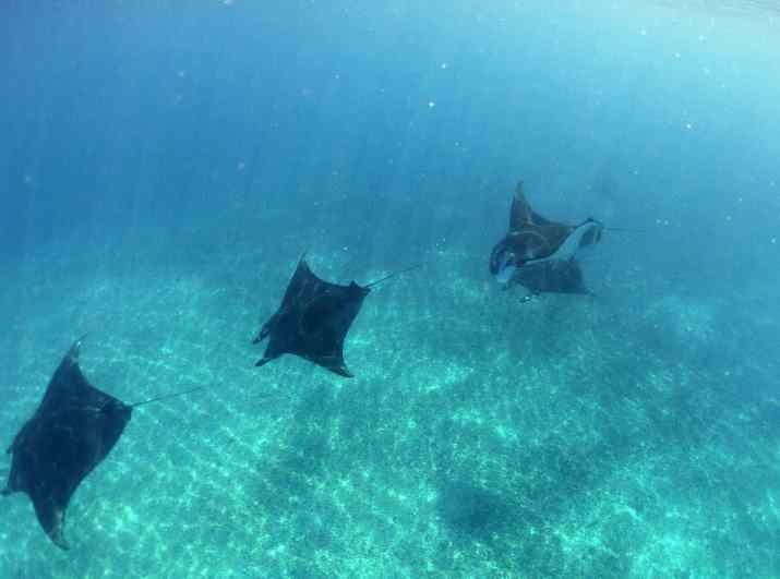 Ray of Hope, Manta Rays, Komodo, Arenui
