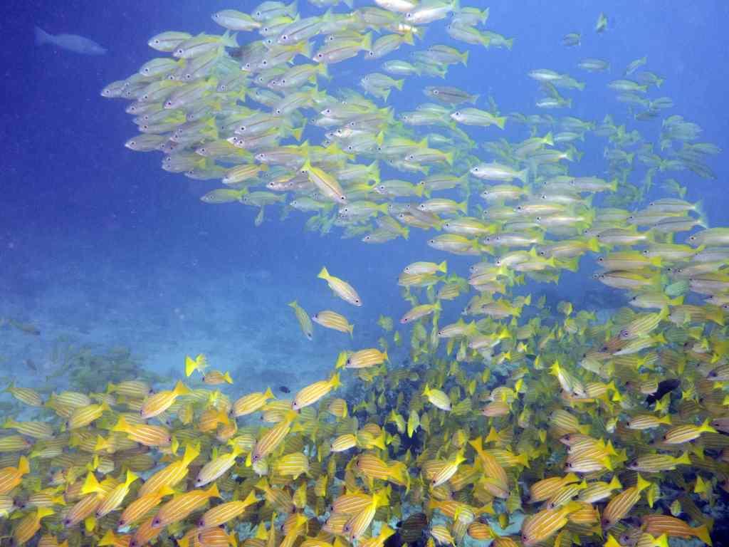 great barrier reef, ribbon reefs, scuba diving
