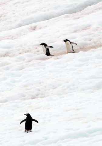 Antarctica, icebergs, lindblad, penguins
