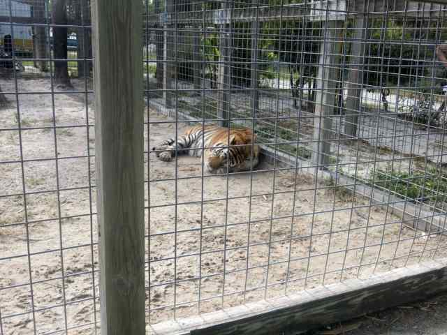 animal sancturies, florida panther, everglades