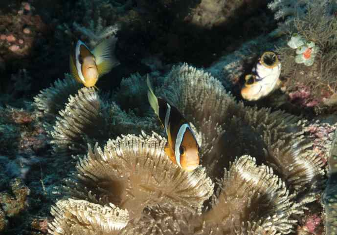 macro, photography, photo blog, raja ampat, scuba, diving