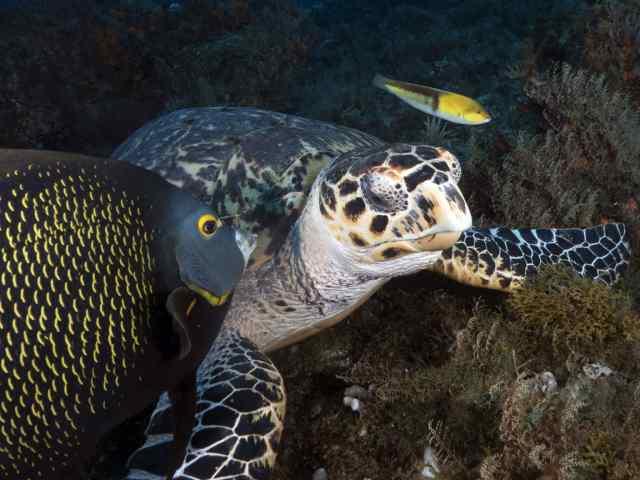 cozumel, turtles, diving cozumel, scuba