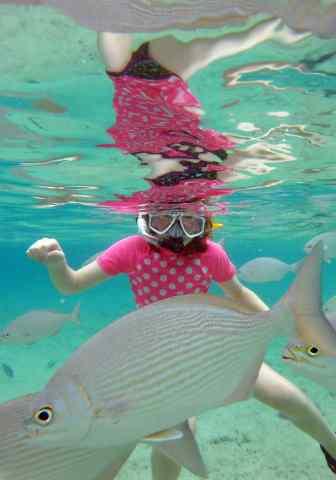 cozumel, snorkeling, learning, wonders ocean