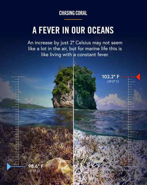 http://www.chasingcoral.com/#film