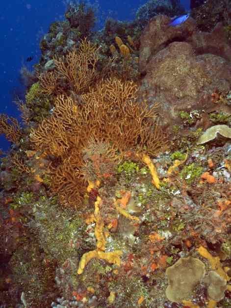 columbia deeps, columbia shallows, cozumel, dive cozumel