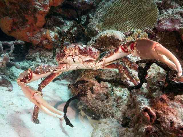 reefs, cozumel diving, palancar, cedar pass, cozumel