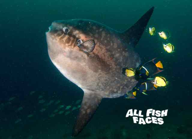 save amazing oceans, all fish faces, fish, how to help the ocean, how to make a difference, #exploremore