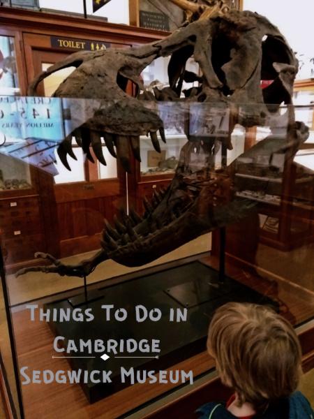 Sedgwick Museum Cambridge Stan