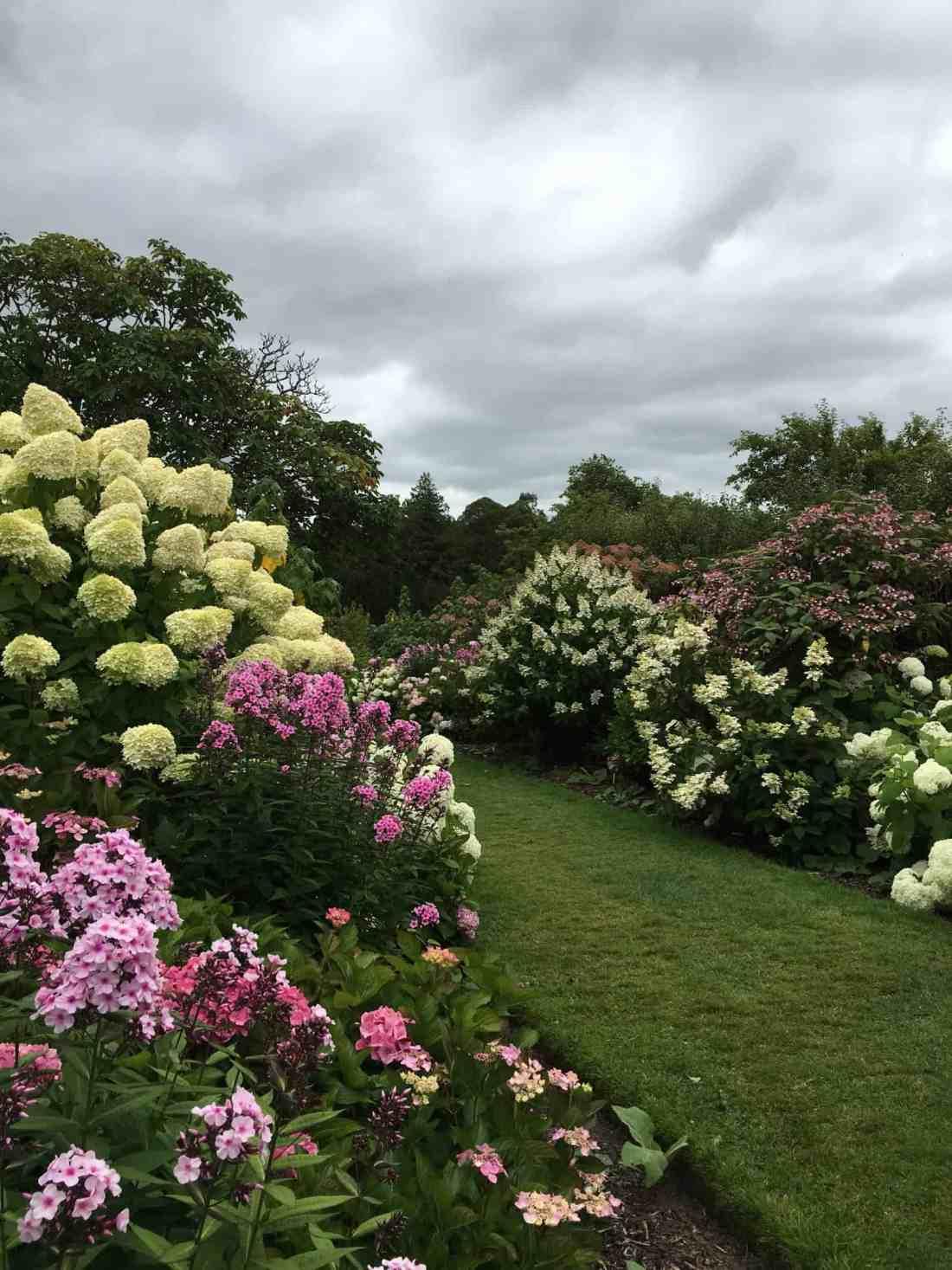 Lismore gardens hydrangea
