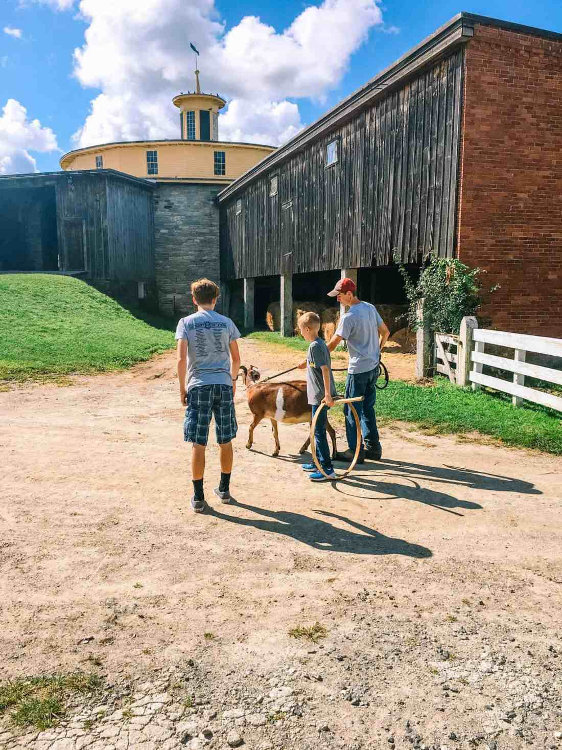 Hancock Shaker Village goat-0880