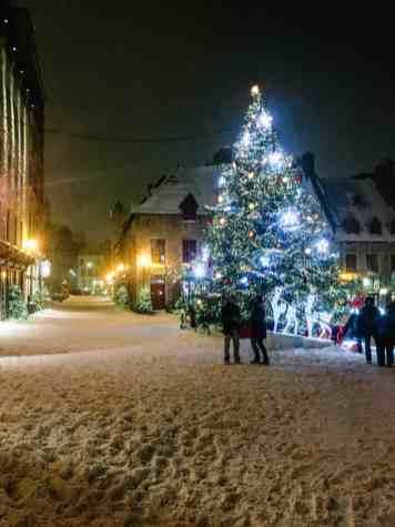 quebec snowy tree-0557