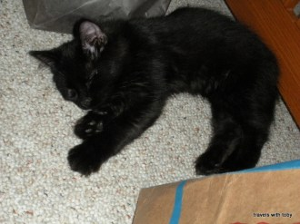 lovely, sleeping kitten