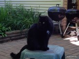 Fritz loves the patio too