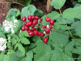 lovely red berries