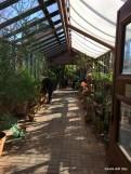 walkway full of succulents